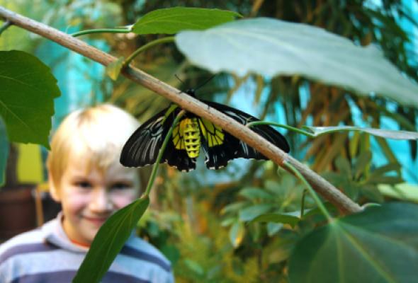 Московский дом бабочек  - Фото №0