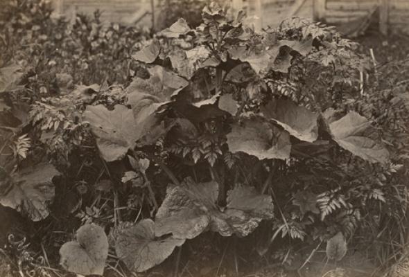 Фотографии XIX в. из коллекции РОСФОТО - Фото №2