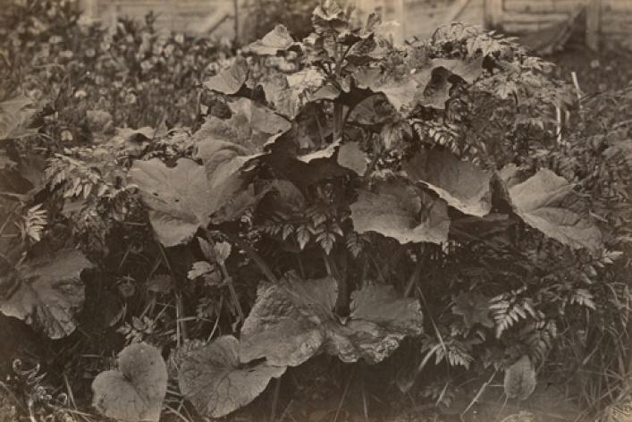 Фотографии XIX в. из коллекции РОСФОТО