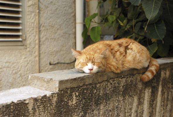 Семейство кошачьих - Фото №7