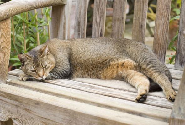 Семейство кошачьих - Фото №8