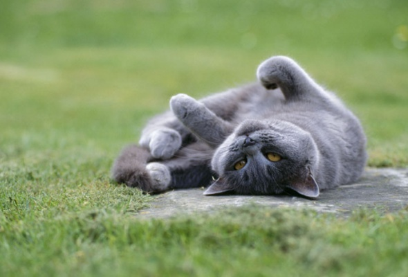 Семейство кошачьих - Фото №6