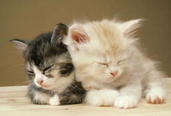 Семейство кошачьих - Фото №0
