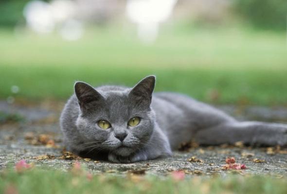 Семейство кошачьих - Фото №9