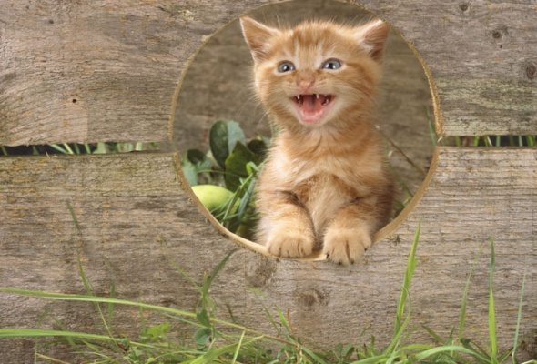 Семейство кошачьих - Фото №1