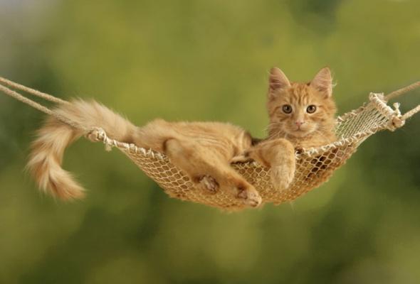 Семейство кошачьих - Фото №10