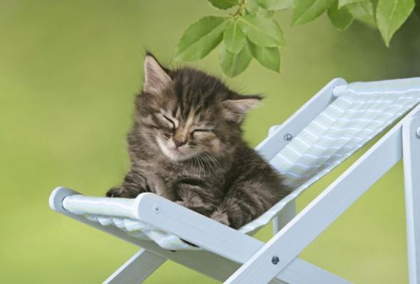 Семейство кошачьих - Фото №3