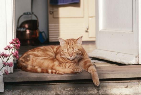 Семейство кошачьих - Фото №11