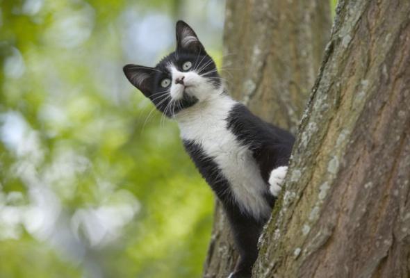 Семейство кошачьих - Фото №12