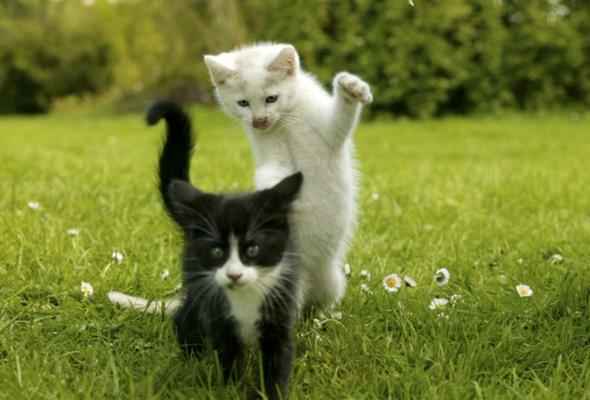 Семейство кошачьих - Фото №2