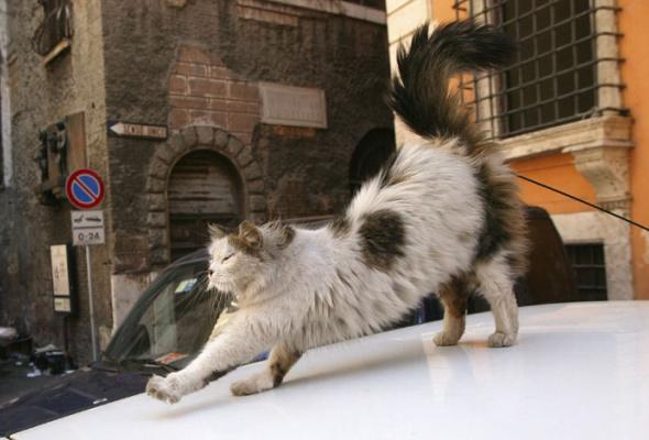 Семейство кошачьих - Фото №13