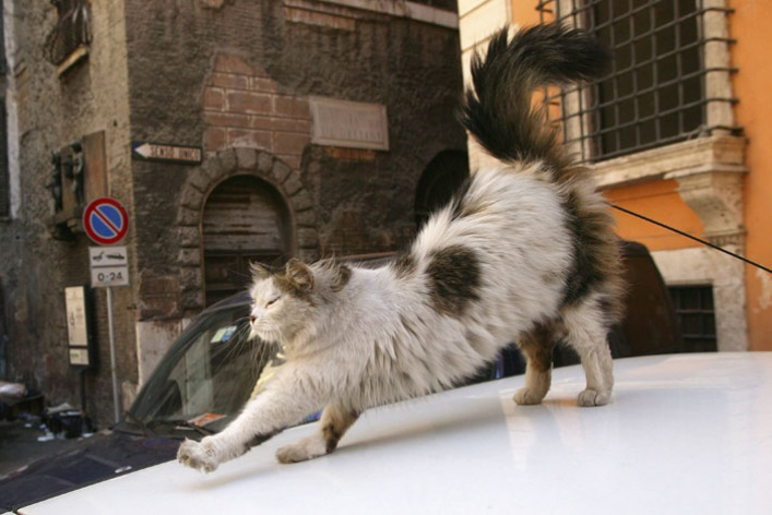 Семейство кошачьих