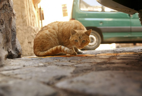 Семейство кошачьих - Фото №14