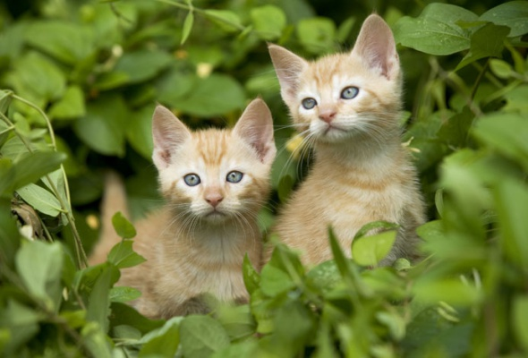 Семейство кошачьих - Фото №4