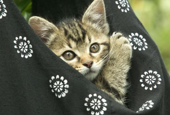 Семейство кошачьих - Фото №22
