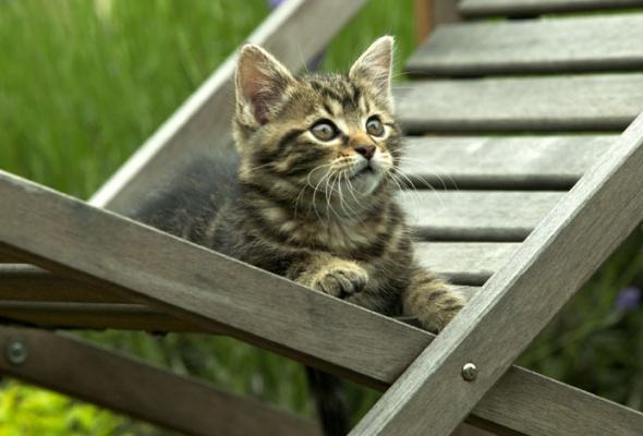 Семейство кошачьих - Фото №23
