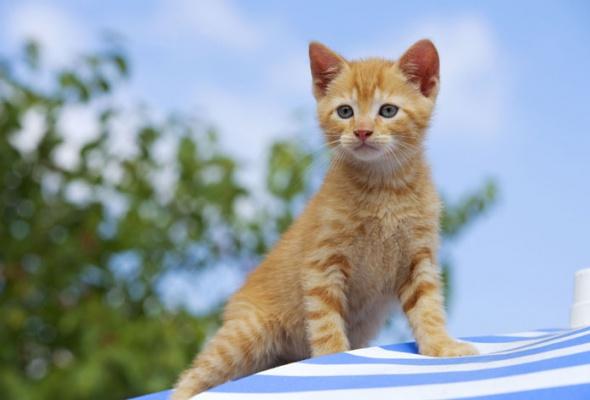 Семейство кошачьих - Фото №24