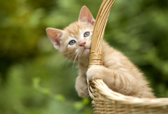 Семейство кошачьих - Фото №25