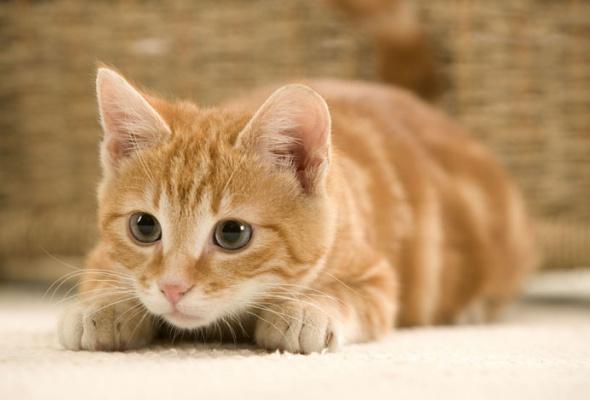 Семейство кошачьих - Фото №27