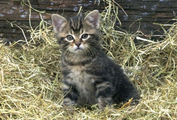 Семейство кошачьих - Фото №28