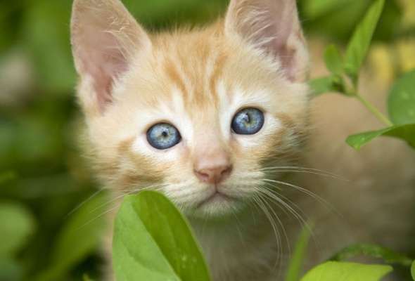 Семейство кошачьих - Фото №29