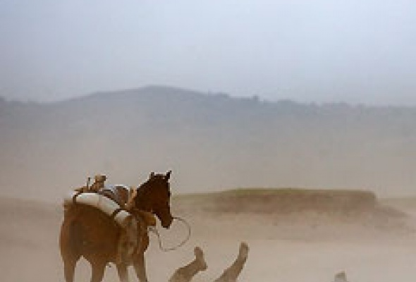 Монгол - Фото №1