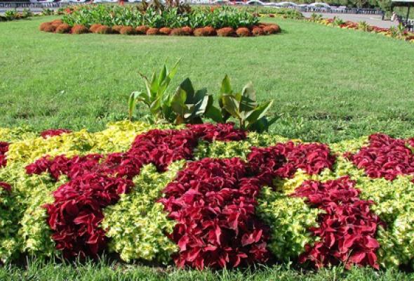 Оранжерея в Нескучном саду - Фото №0