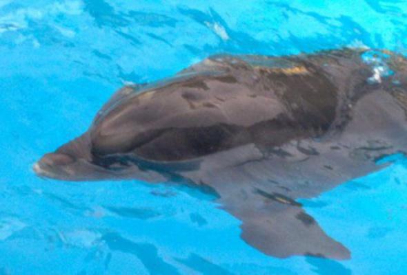 Дельфинарий на ВВЦ - Фото №0