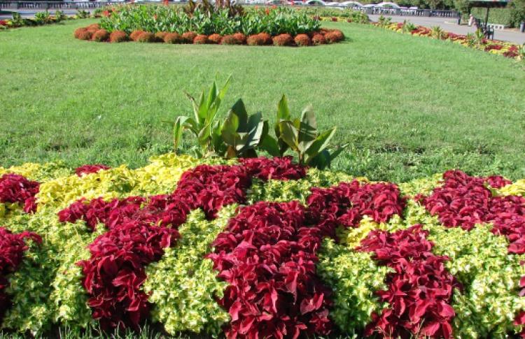 ВНескучном саду появятся оранжереи