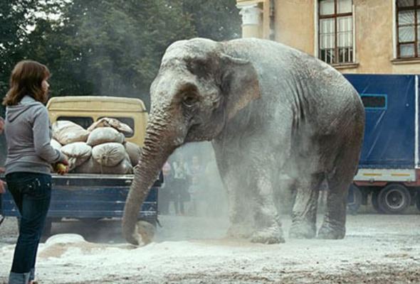 Слон - Фото №2