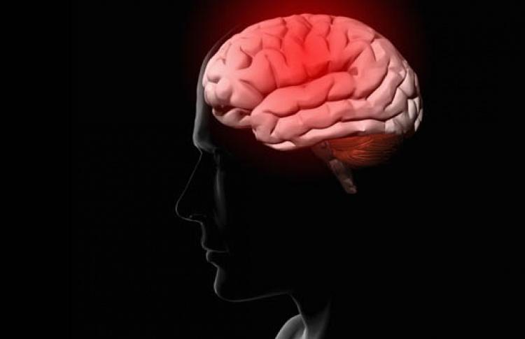 Из чего сделан мозг?