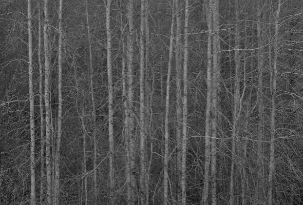 Ярослав Амелин «Ветер тишины» - Фото №3