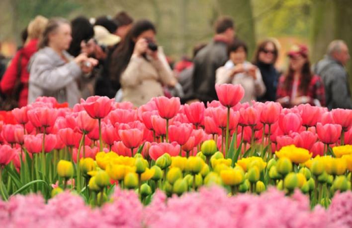 ВПарке Горького посадят тысячи голландских тюльпанов