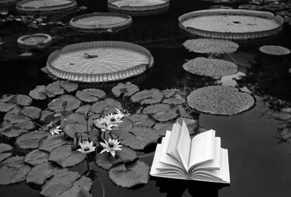 Флор Гардуньо «Сны и метафоры» - Фото №8