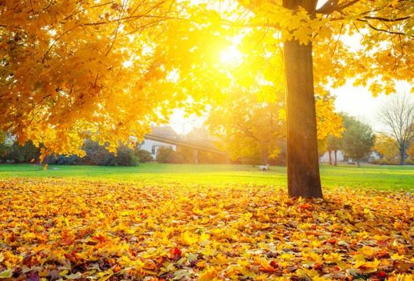 25причин любить осень - Фото №0