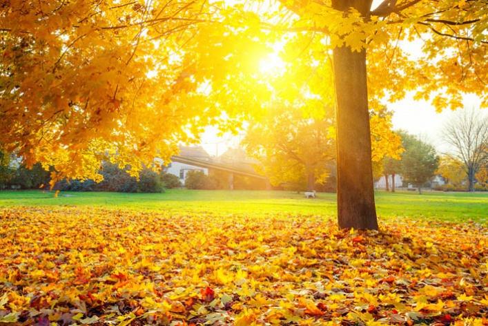 25причин любить осень