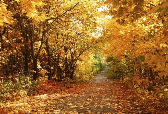 25причин любить осень - Фото №3