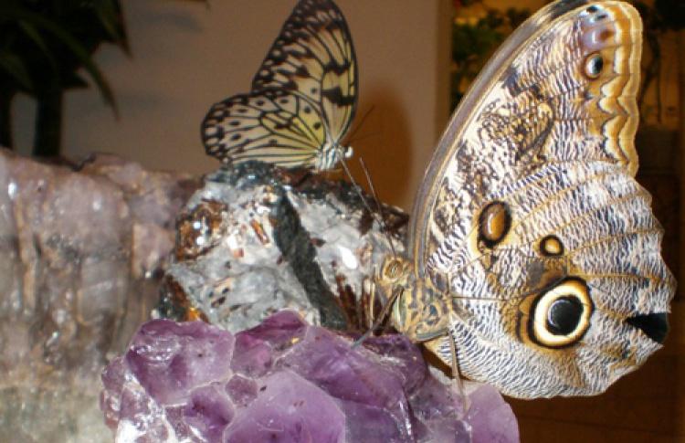 Летающие драгоценности. Бабочки и драгоценные камни
