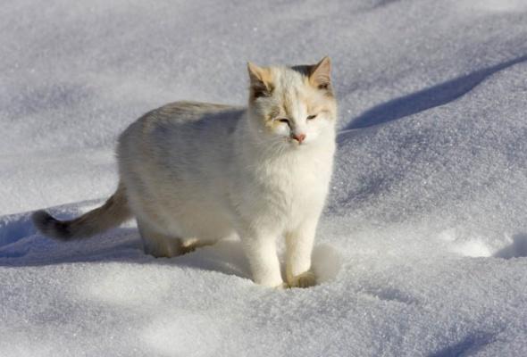 30причин любить зиму - Фото №6