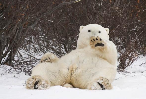 30причин любить зиму - Фото №5