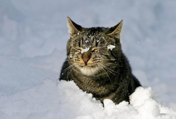 30причин любить зиму - Фото №7