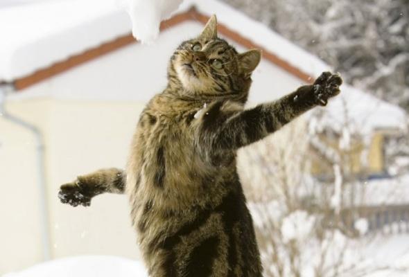 30причин любить зиму - Фото №2