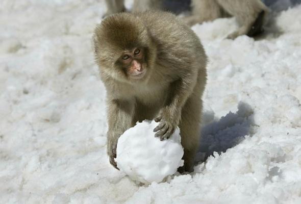 30причин любить зиму - Фото №3