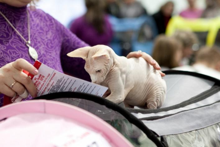 Гран-при Royal Canin