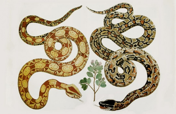 Встречая год змеи