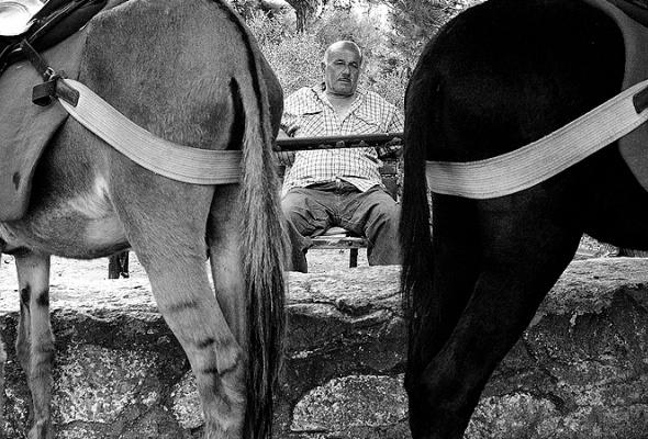 """Серкант Хекимджи """"Стамбул"""" - Фото №2"""