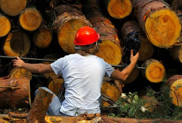 Я выбираю лес - Фото №3