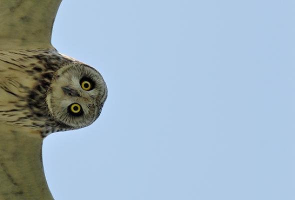 Золотая черепаха - Фото №4