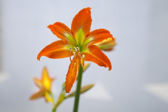 Флирт цветов