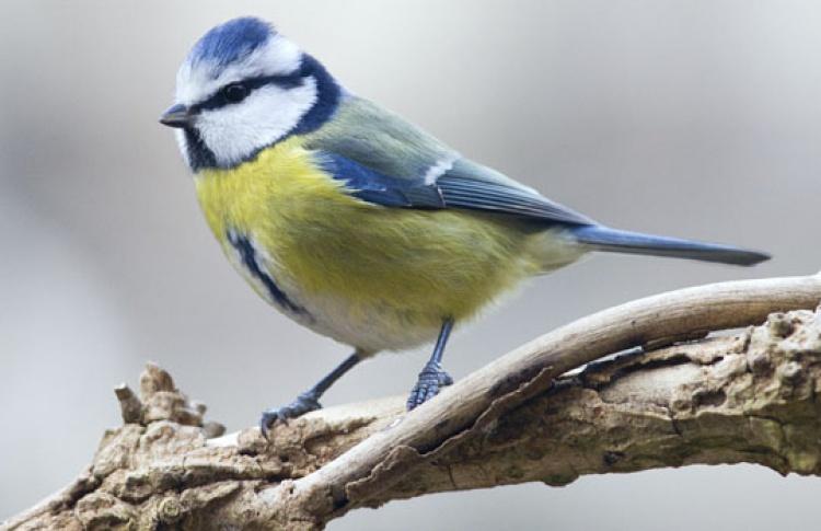 Птичий пир